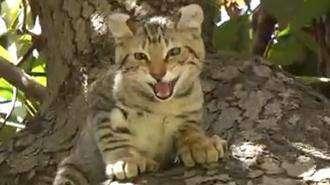 Il Ritorno Del Gatto Selvatico Outdoor Passion