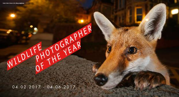 Wildlife Photographer of the Year (foto Sam Hobson)
